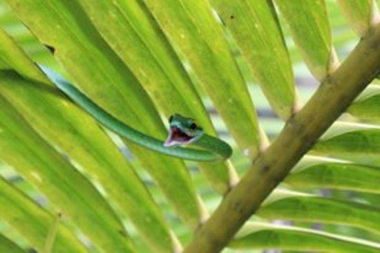 Puerto Jimenes, Costa Rica: Snake