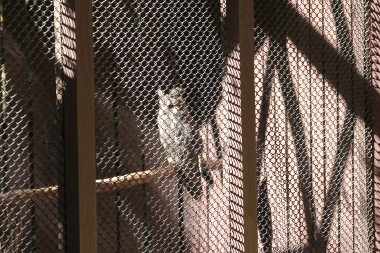 Carolina Raptor Center: owl