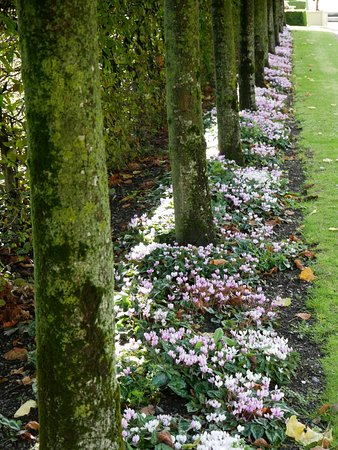 Royal Hospital Kilmainham: Winter flowers