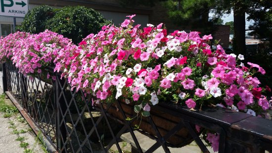 Chagrin Falls, OH: Flower baskets everywhere
