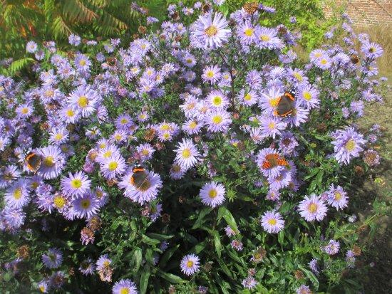 Helmsley, UK: Butterflies in October!