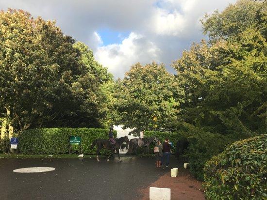 Kilconquhar, UK: equestrian