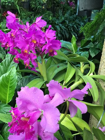 Kennett Square, PA: Orchids in the Conservatory