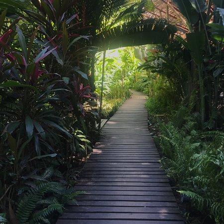 Cocles, Κόστα Ρίκα: photo4.jpg