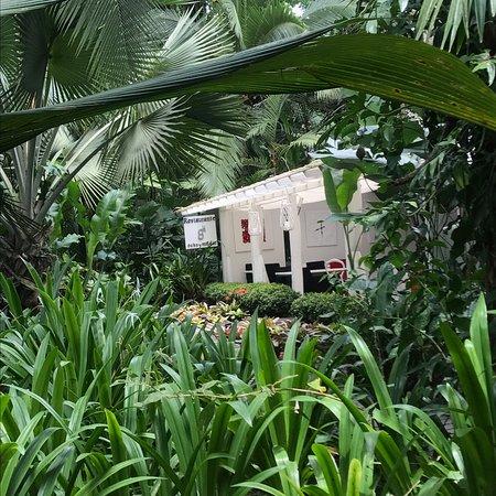 Cocles, Kosta Rika: photo8.jpg