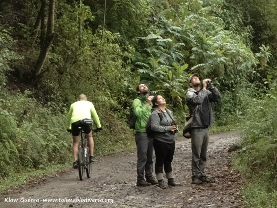 Ibague, Colombia: Birdwatching activity close to Ibagué