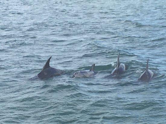 Manteo, NC: dolphins