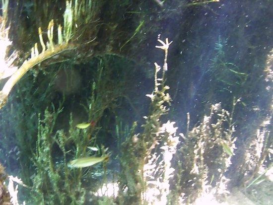 plantas debaixo da água no fervedouros dos Buritis