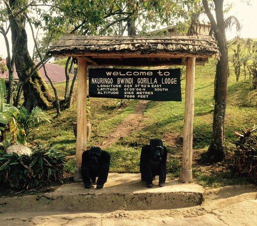 Nkuringo Bwindi Gorilla Lodge: welcome!