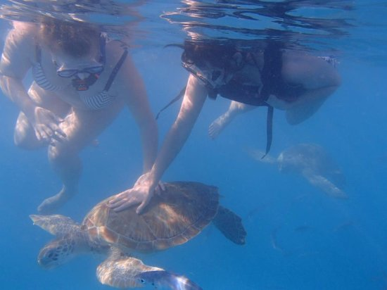 Holetown, Barbados: Snorkeling with friendly turtles