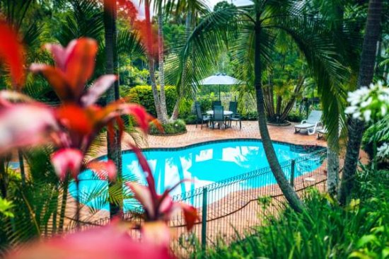 Bellingen, ออสเตรเลีย: Oasis Pool with Tropical Surrounds