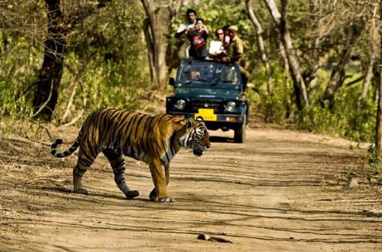 Private 5-Day Ranthambhore Tiger Tour...