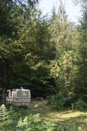 Nakusp, Kanada: Forested Private Campsite just 2 mins from the creek