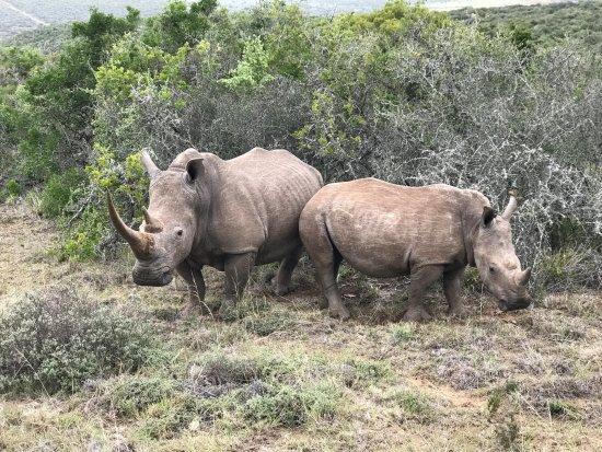 Shamwari Game Reserve Lodges: On safari - Whito Rhino