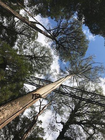 Otway Fly Treetop Adventures: photo0.jpg