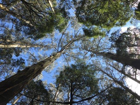 Otway Fly Treetop Adventures: photo1.jpg