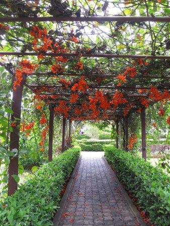 Nilambur Teak Museum: Nice Flowers In The Garden
