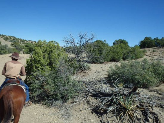 Cerrillos, NM: On the trail