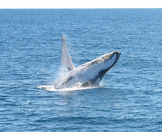 Playful Humpback Whales! Photo taken during a Whale Watching tour with Coral Bay Ecotours.