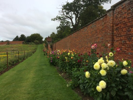 Horringer, UK: Dahlia borders in the kitchen garden Ickworth House