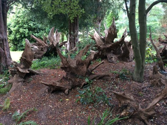Horringer, UK: The Stumpery