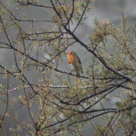 North Birding Tours - Day Tours