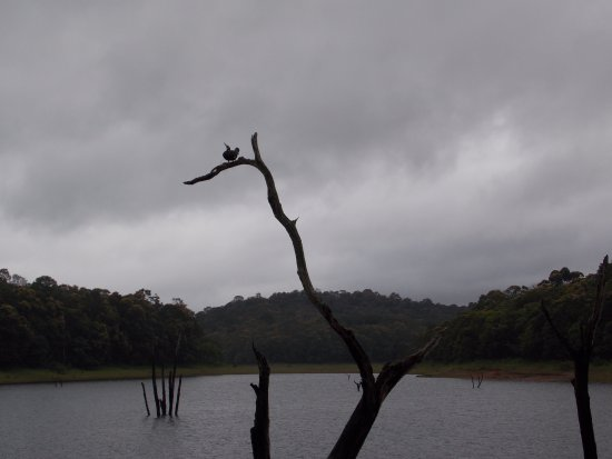 Idukki District, Indien: Birds in Periyar lake
