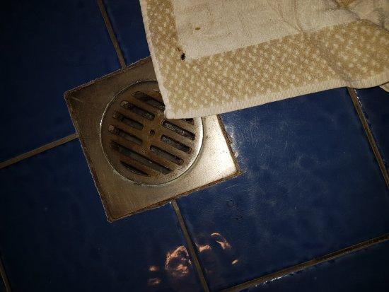 Bathroom Smells Like Sewage Picture Of Iolida Beach Hotel Agia Marina Tripadvisor