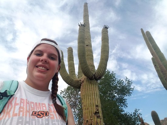 Red Hills Visitor Center: cacti along desert discovery trail