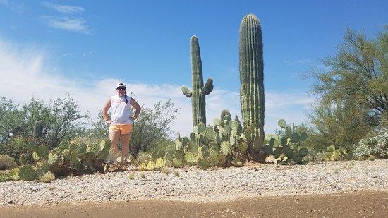 Rincon Mountain Visitor Center: Mica Trail Cacti
