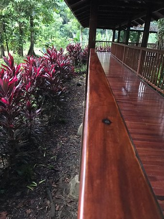 Sarapiqui, Costa Rica: מלון ששוכן בג'ונגל