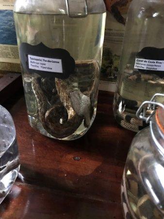 Selva Verde Lodge: מלון ששוכן בג'ונגל