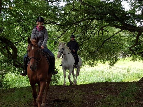 Quin, Irlande : woodland wonderland!!