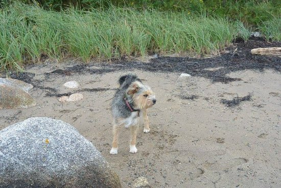 Guysborough, Canada: the resident furry freind