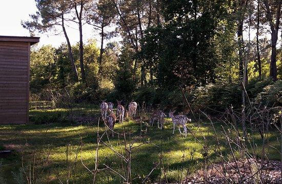 Au fond du jardin picture of center parcs domaine le for Au jardin review