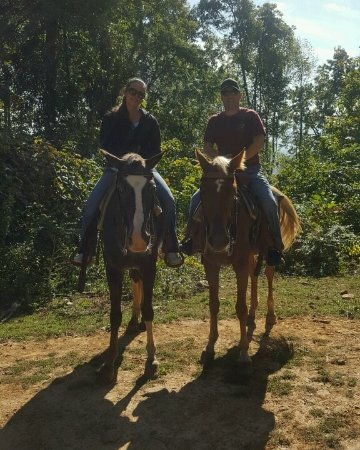 Queen 39 s farm stables waynesville all you need to know - Craigslist fort wayne farm and garden ...