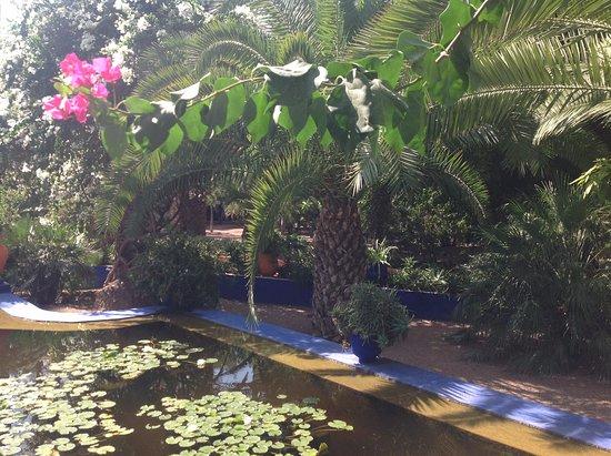 Jard n majorelle picture of jardin majorelle marrakech for Jardin majorelle