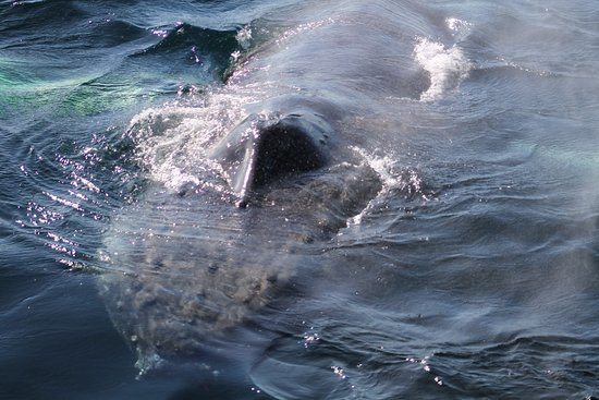Bay Bulls, Canada: Whale close to boat