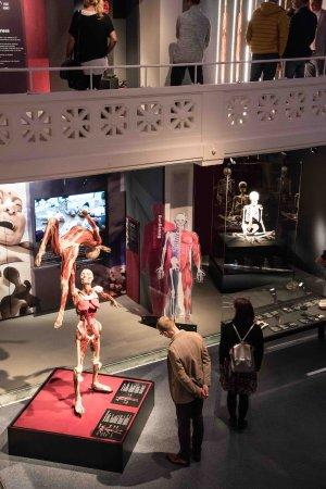 Koerperwelten Museum Anatomie des Glueck