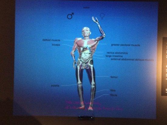 Den eigenen Körper mal von innen betrachten... - Bild von MeMu ...
