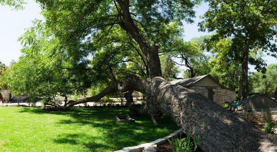 Salado, TX: Our beautiful grounds