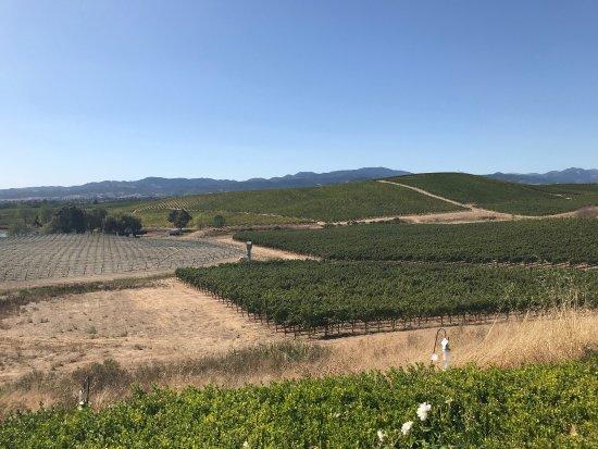William Hill Estate Winery: photo1.jpg