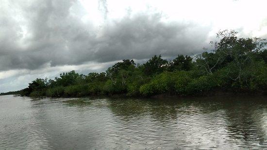 Sundarban, Ινδία: Dense forests