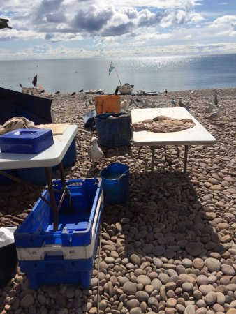 Budleigh Salterton, UK: Spot the greedy young seagull in the fisherman's gut bucket.