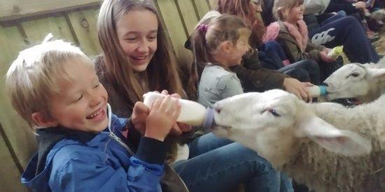Bolton, UK: Feeding the lambs
