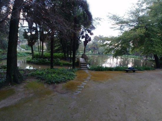 Hotel Casa Real-Viña Santa Rita: Laguna con 1 cisne