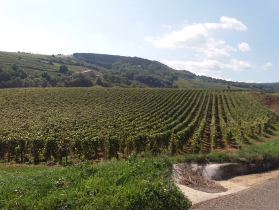 Solutre-Pouilly, Франция: the vineyards