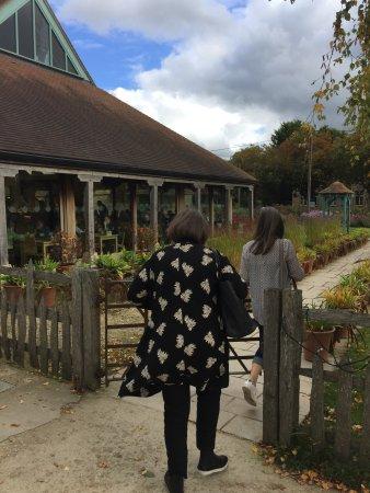 Aston, UK : autumn bright Dalia with lunch
