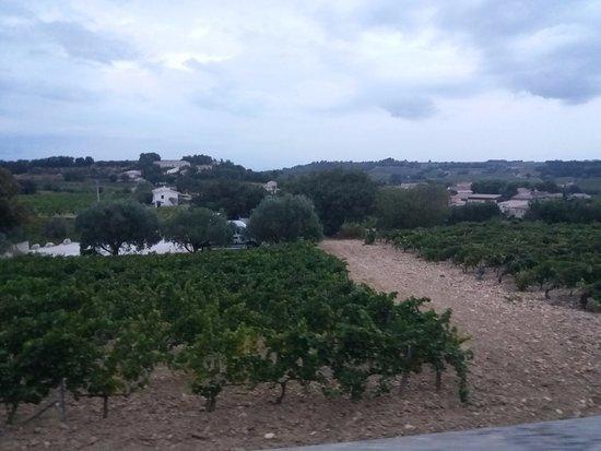 Sarrians, Frankrijk: The vines