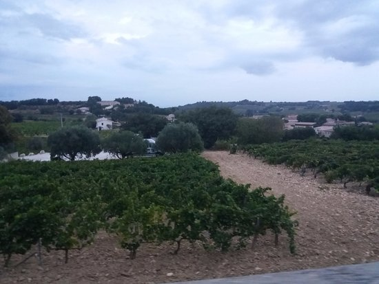 Sarrians, Frankrike: The vines